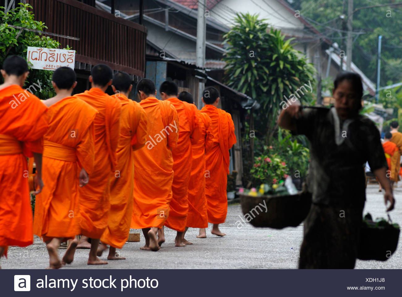 Morning alms procession, Thakbat of the monks and novices in the monasteries of Luang Prabang, Laos, Southeast Asia - Stock Image