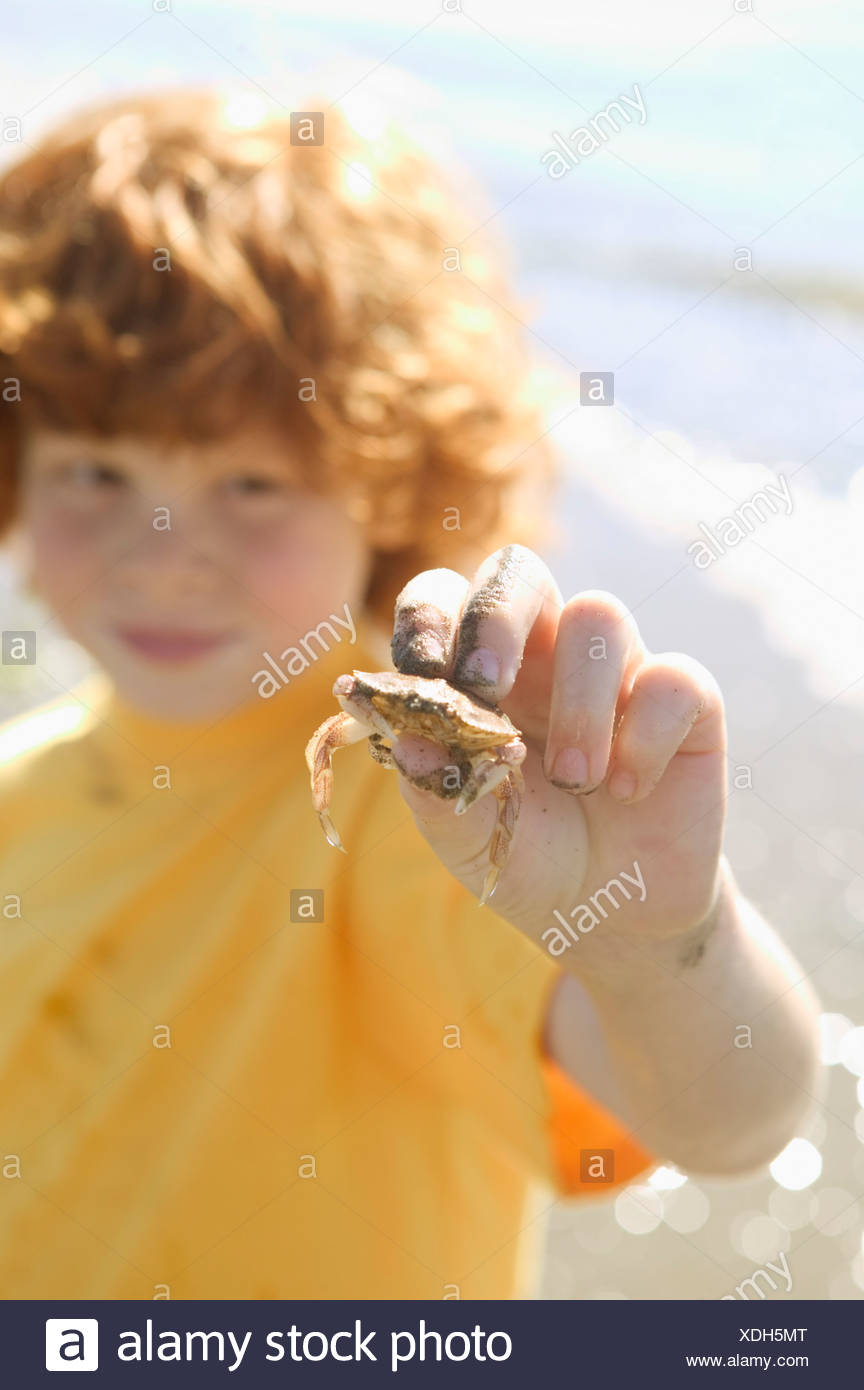 Red headed boy holding a small crab - Stock Image