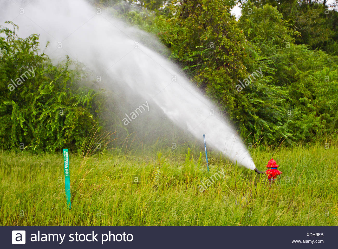 A fire hydrant releases water pressure from heavy rains due to Hurricane Isaac. - Stock Image