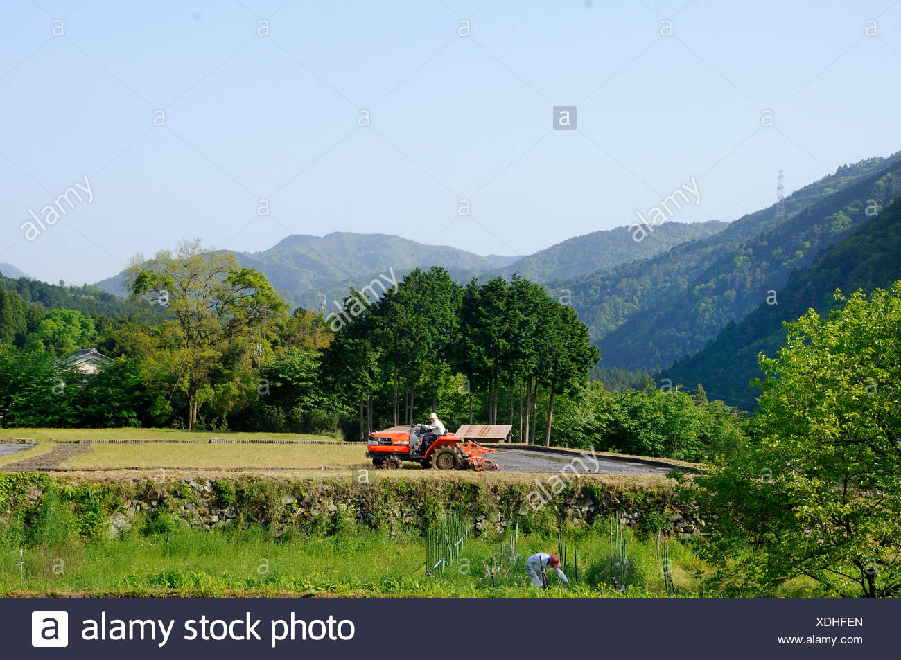 Rice farmer mulching his rice paddy on a terrace, Ohara, Japan, Asia - Stock Image