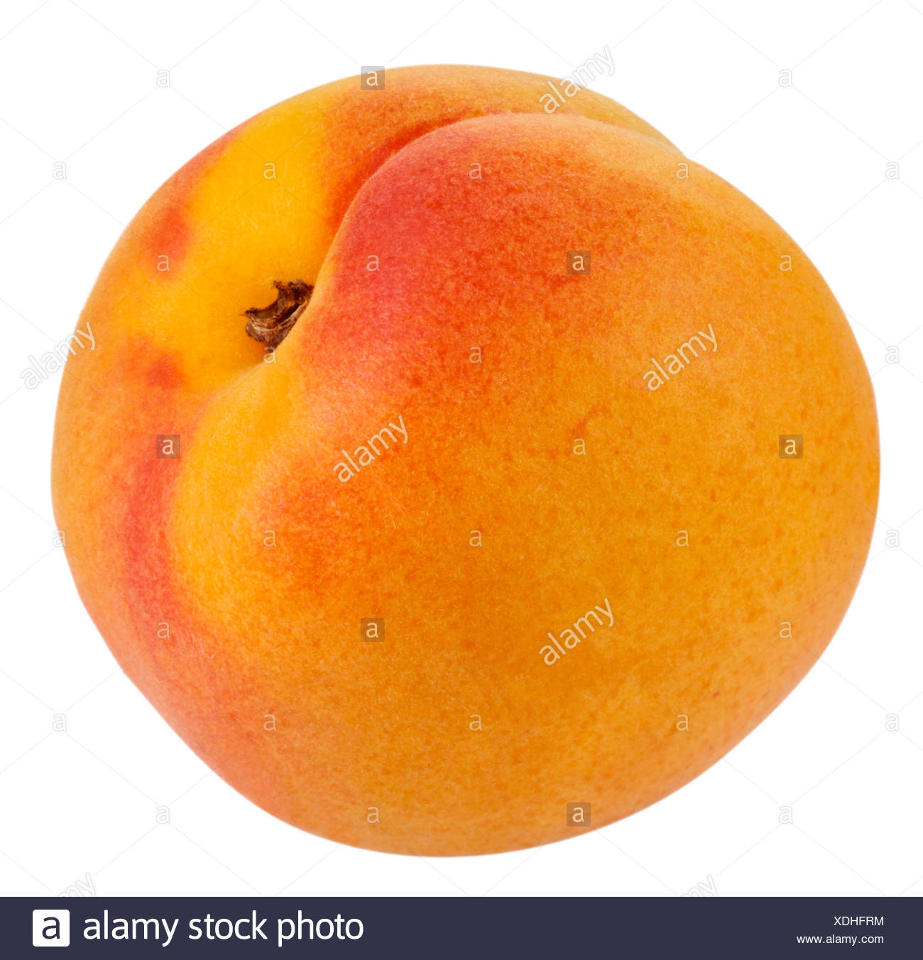 WHOLE APRICOT CUT OUT - Stock Image