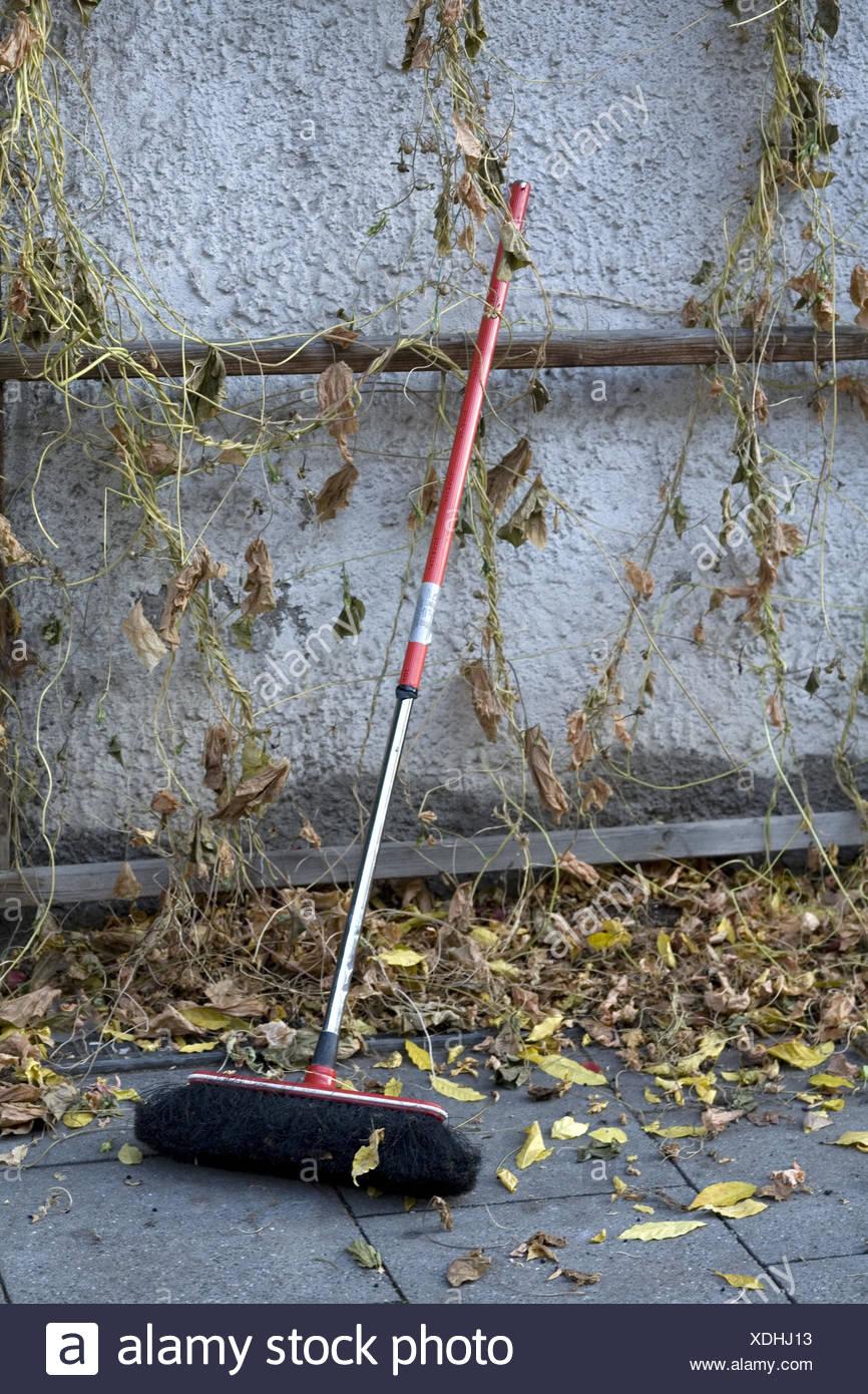 Broom in autumn foliage, - Stock Image