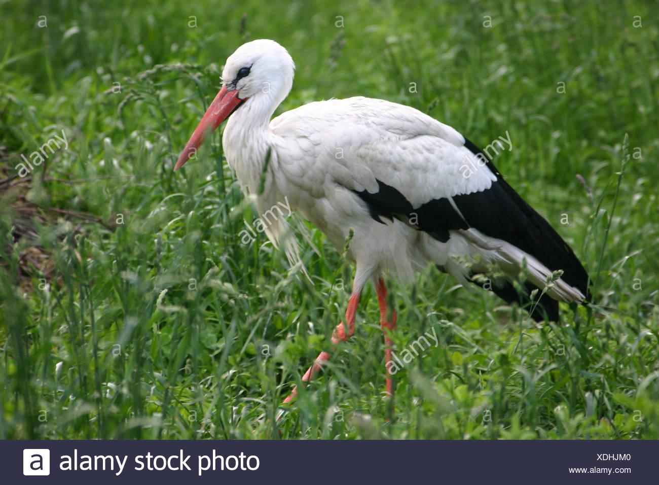 animal bird field Stock Photo