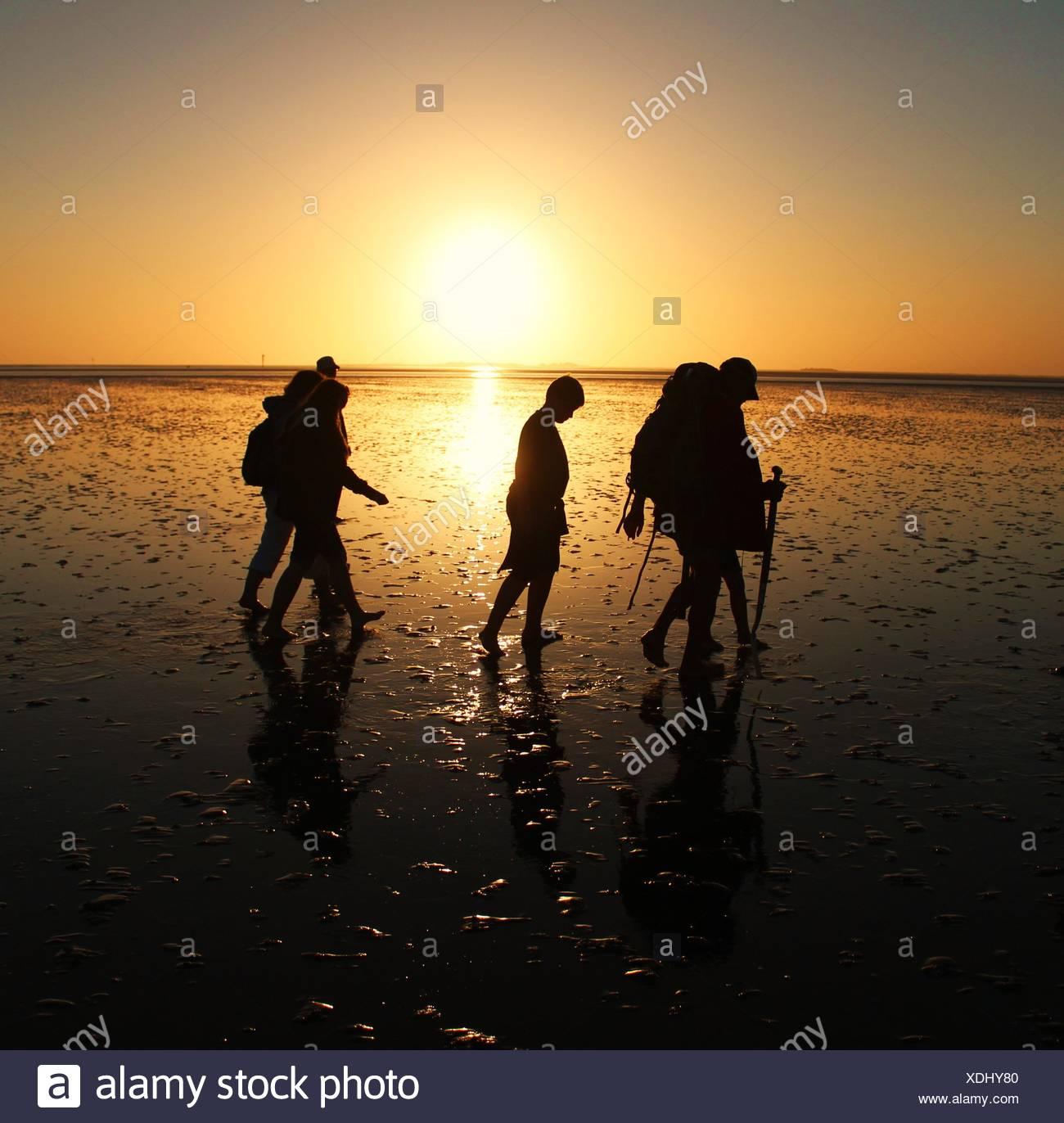 Mud flat wandering at sunset - Stock Image