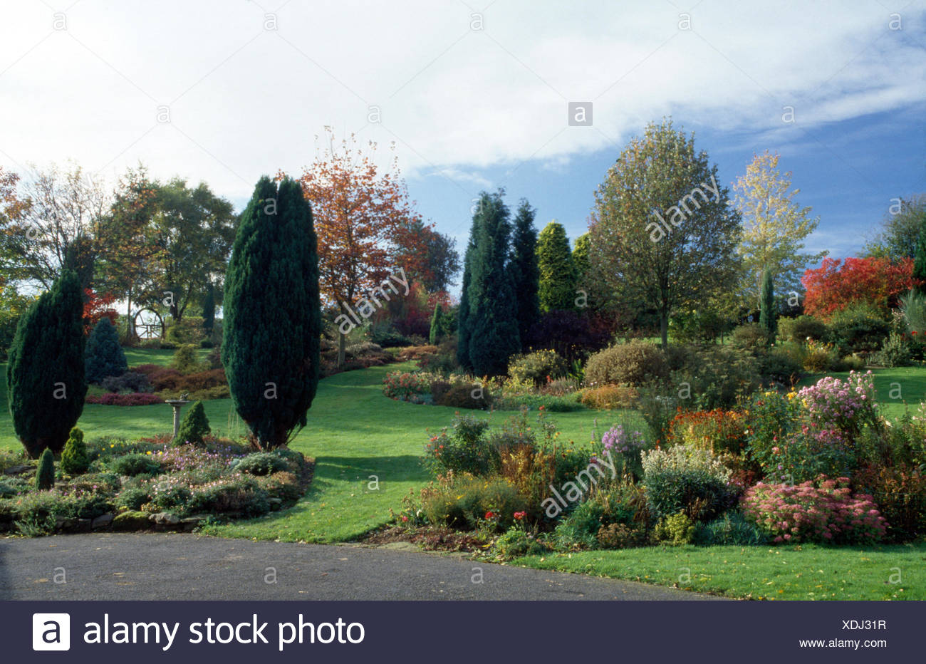 Tall conifers in a large, well tended country garden with small shrubs in neat borders - Stock Image