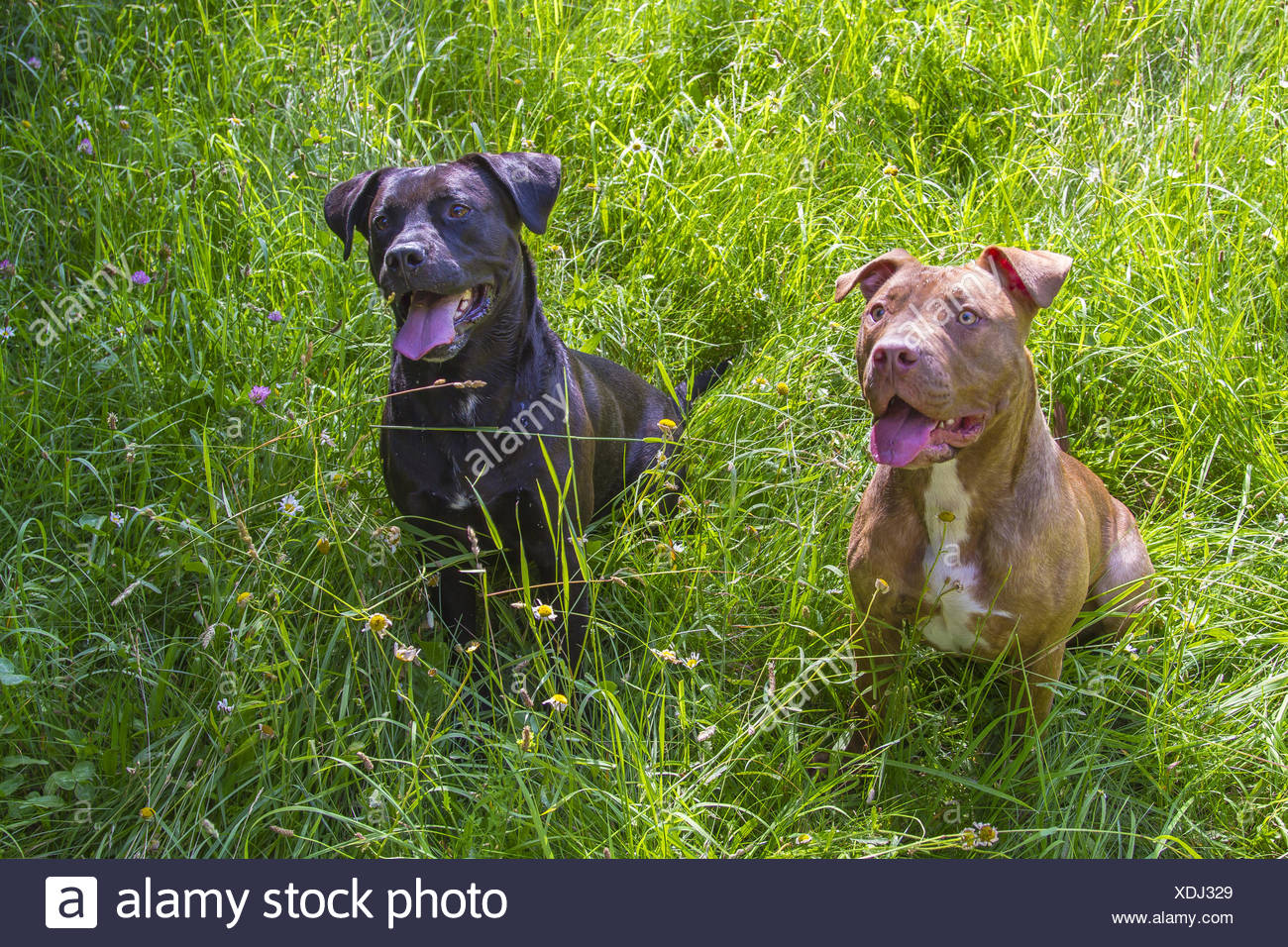 two friends - Stock Image