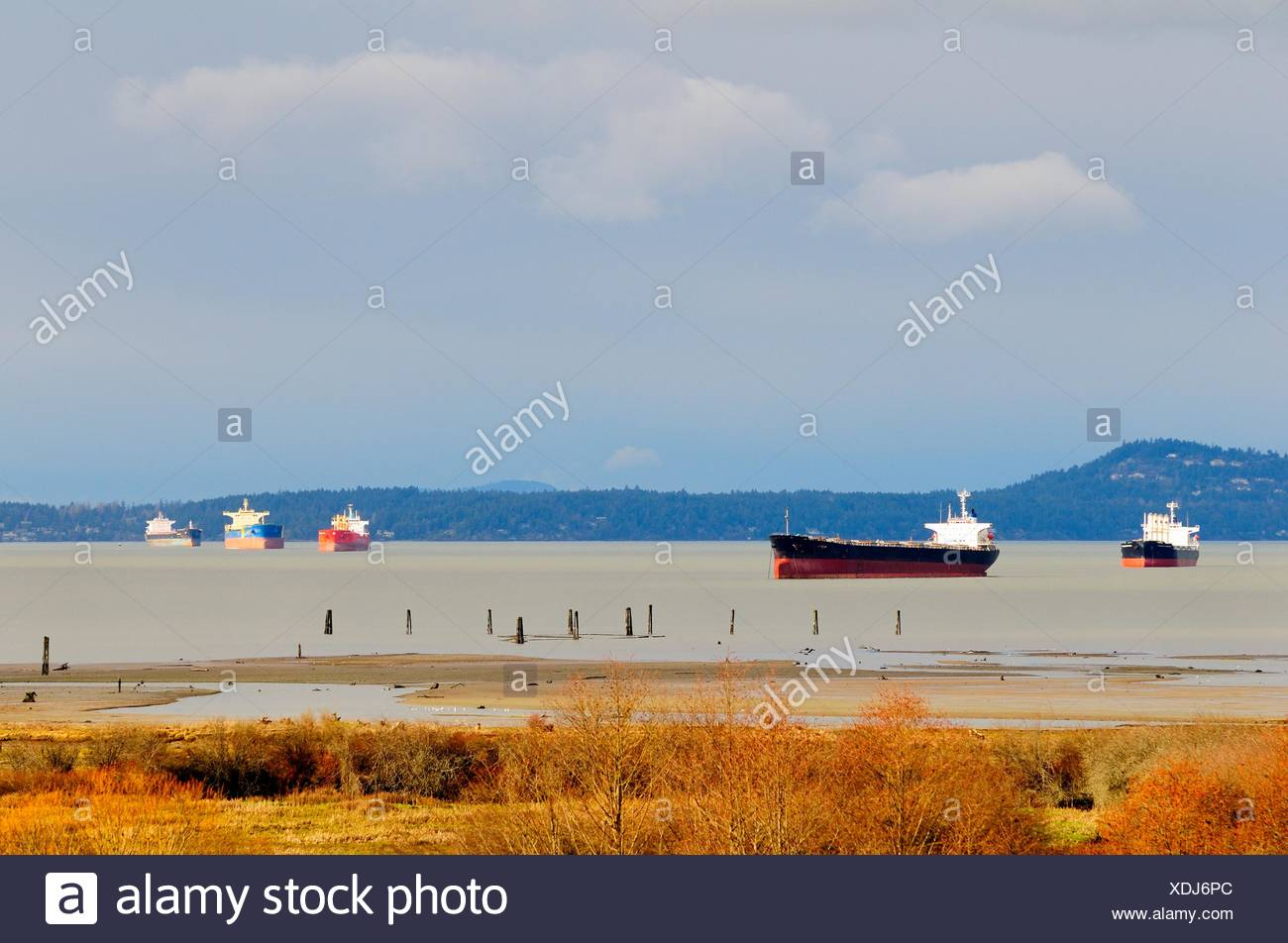 Freighters anchored in Cowichan Bay, BC. - Stock Image