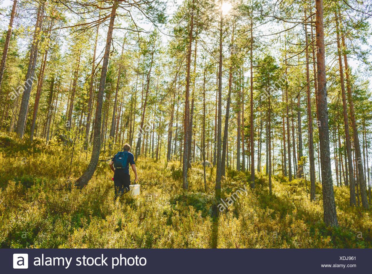 Finland, Keski-Suomi, Jyvaskyla, Man walking in pine forest - Stock Image