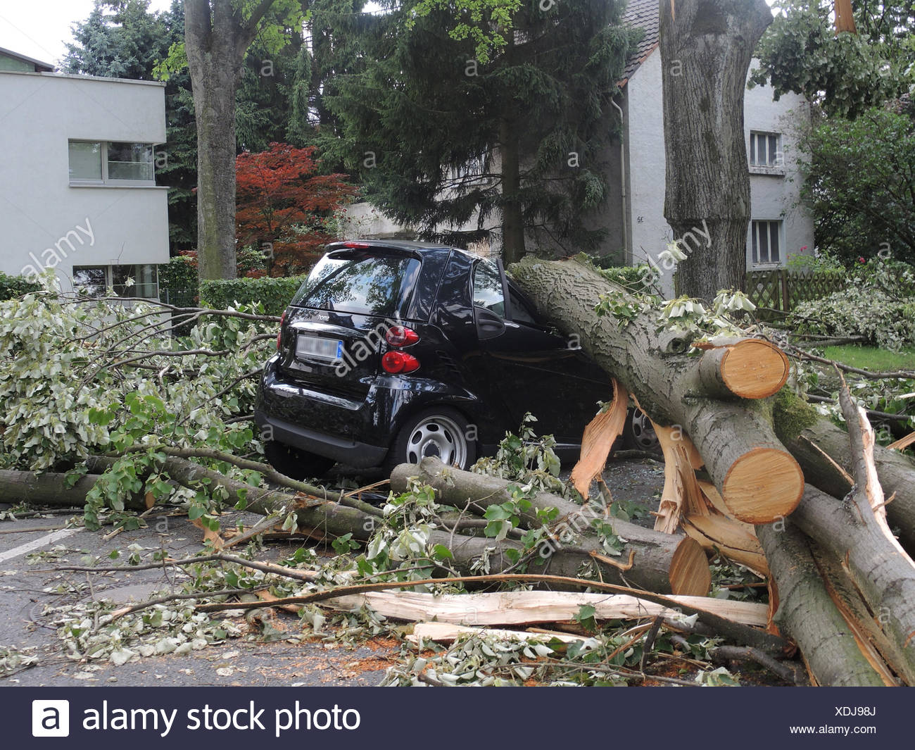 tree fallen on parked car, damages by storm front Ela at 2014-06-09, Germany, North Rhine-Westphalia, Ruhr Area, Bochum Stock Photo