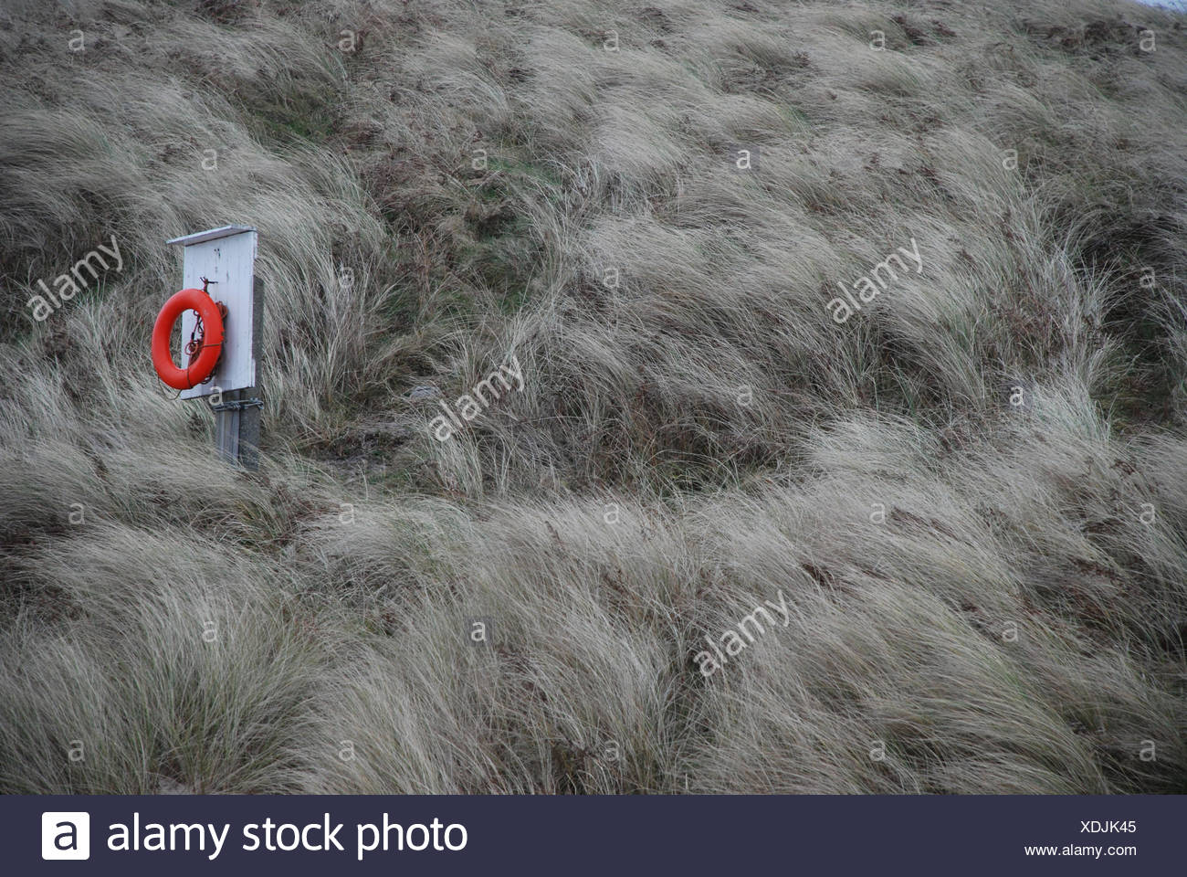 Life saver ring in long grass - Stock Image
