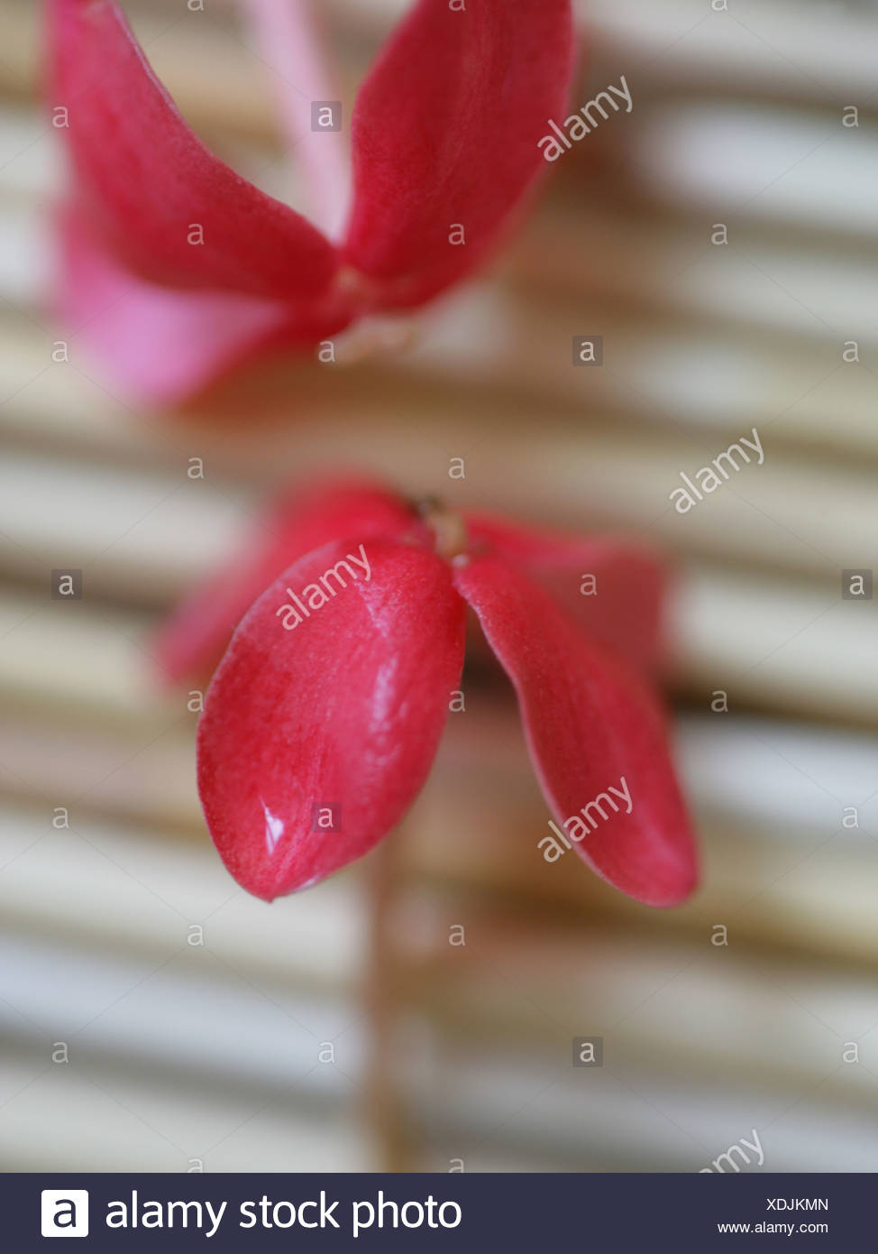 Close-up of flowers - Stock Image