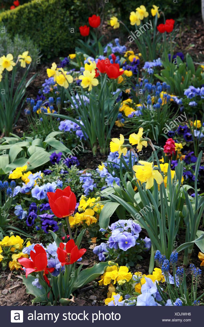 colourfull spring flowers - Stock Image