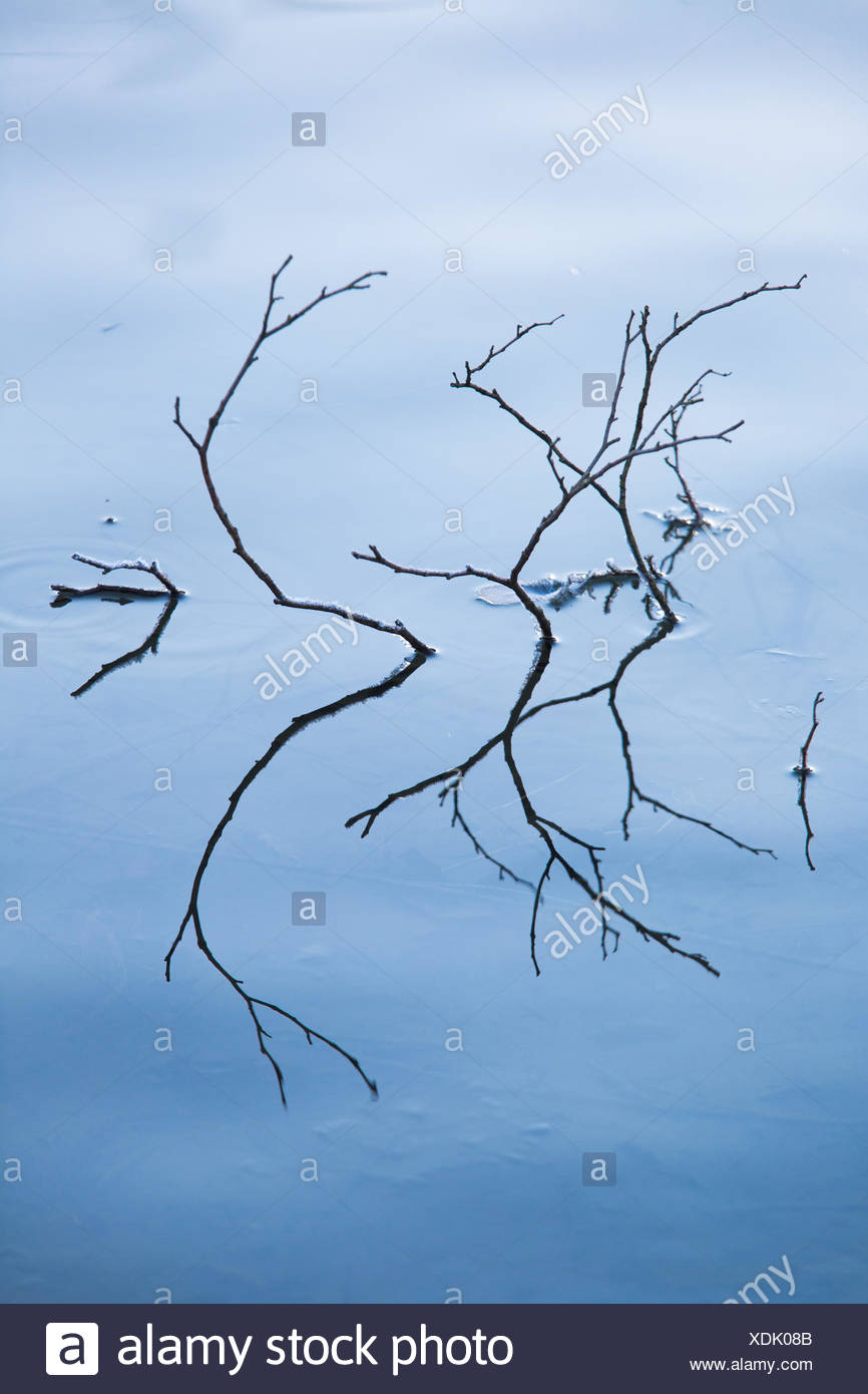 ice surface of the water - Stock Image