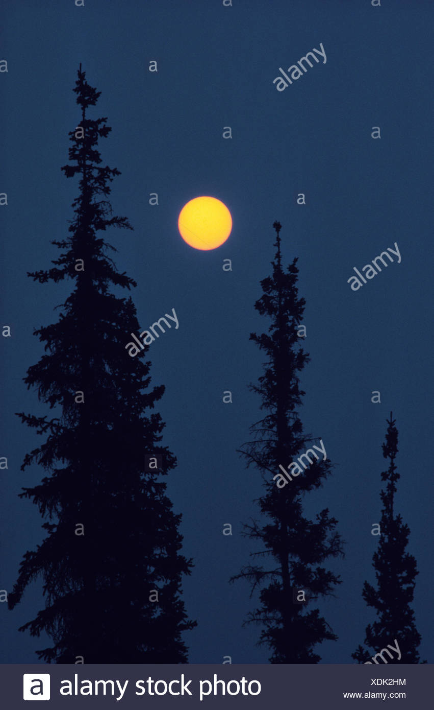 Black spruce trees (Picea mariana) and sun with smoke from forest fire Nahanni National Park Northwest Territories Canada - Stock Image