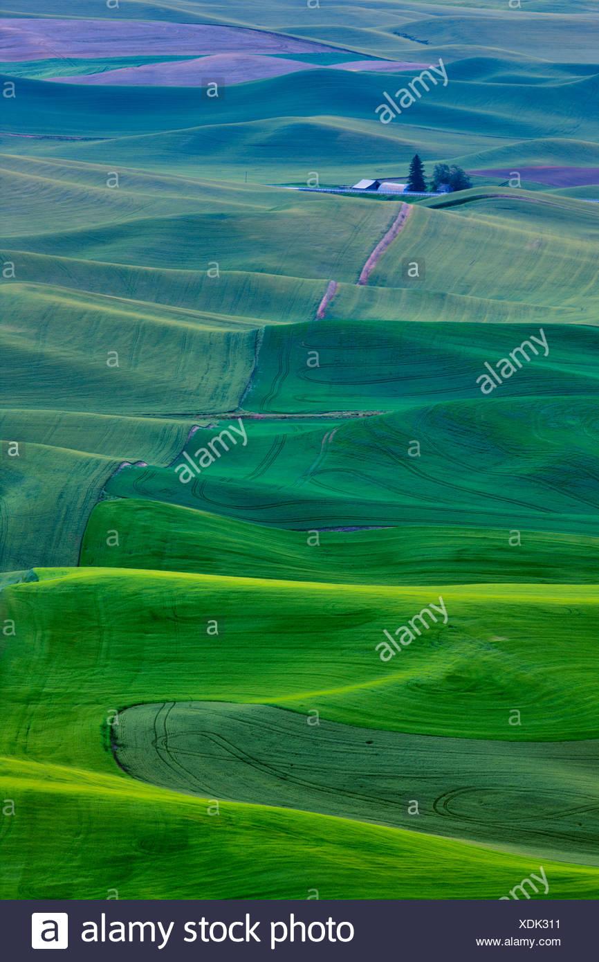 High angle view of rolling hills, Palouse, Washington State, USA - Stock Image