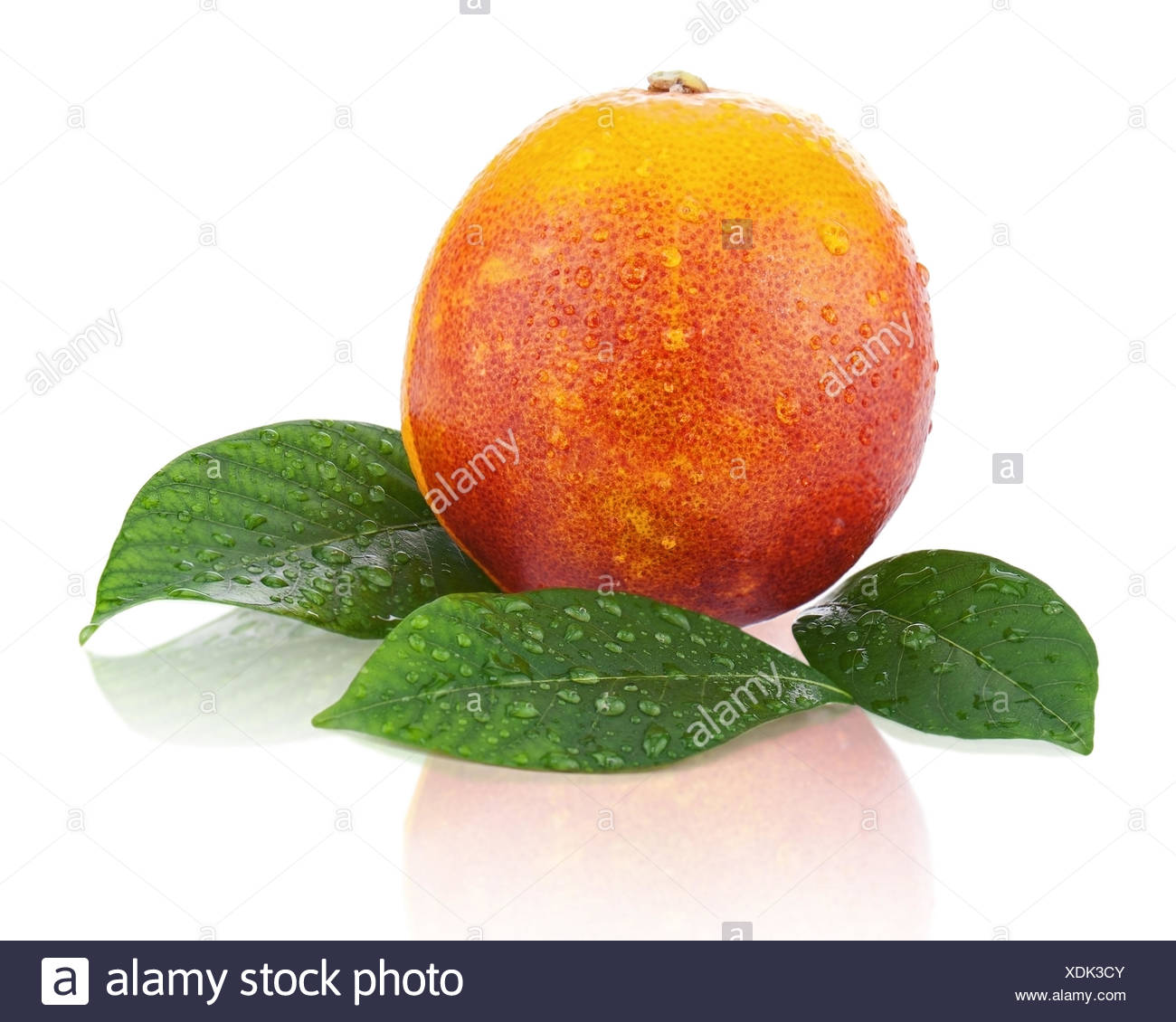 Ripe red blood oranges with green leaves isolated on white background. Closeup. - Stock Image
