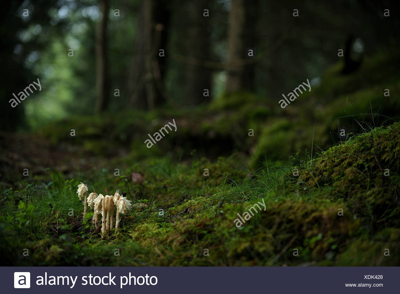 Mushrooms in the wood Stock Photo