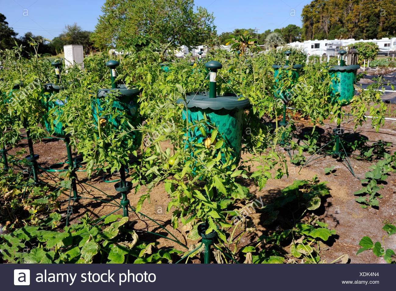 Tomato Grow Bag Container For Productive Small Home Garden ...