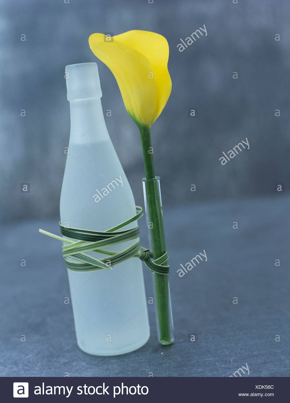 Yellow Calla in bottle - Stock Image