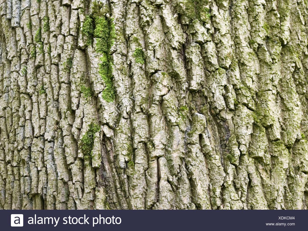 tree texture - Stock Image
