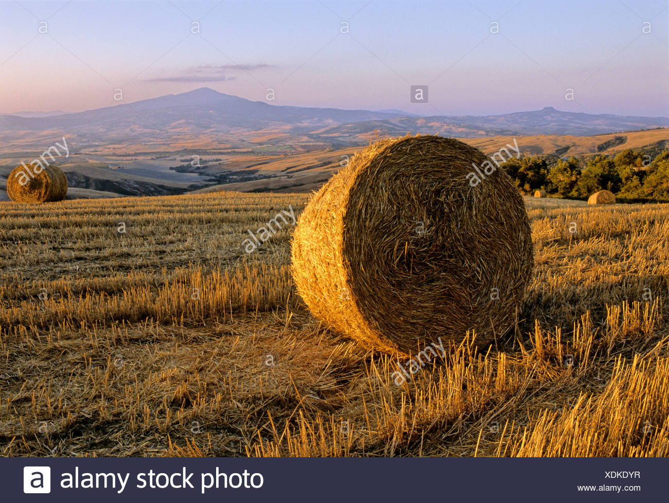 Bale of straw, harvested wheatfields, landscape around Radicofani and Monte Amiata at sunset, Val d' Orcia near Monticchiello,  - Stock Image