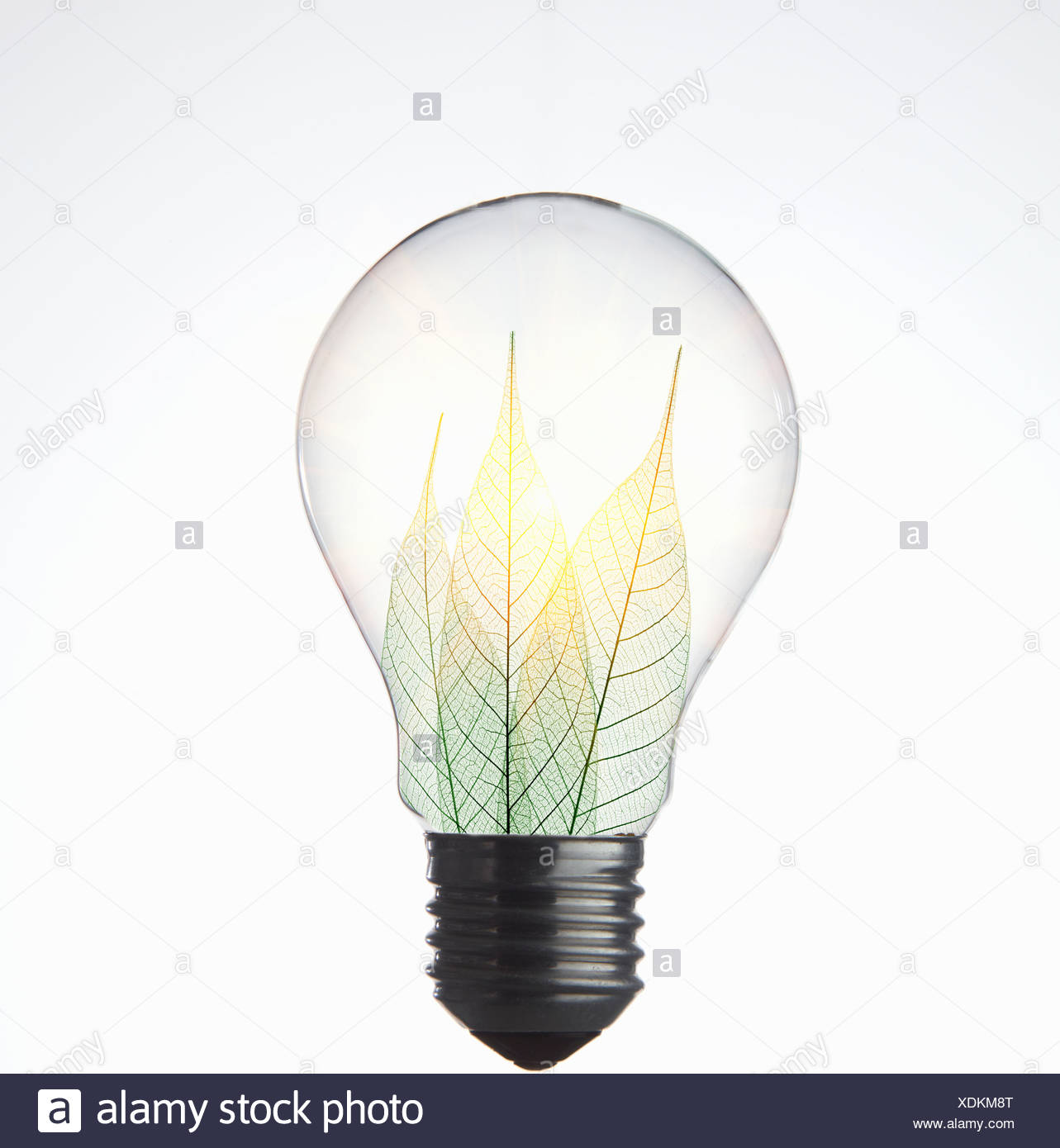Leaves growing in light bulb - Stock Image