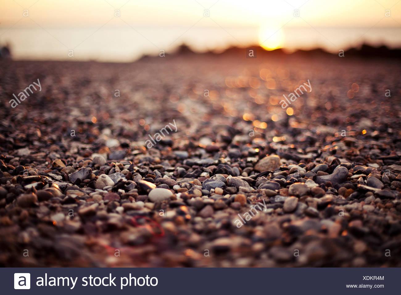 Stony beach on Hiddensee - Stock Image
