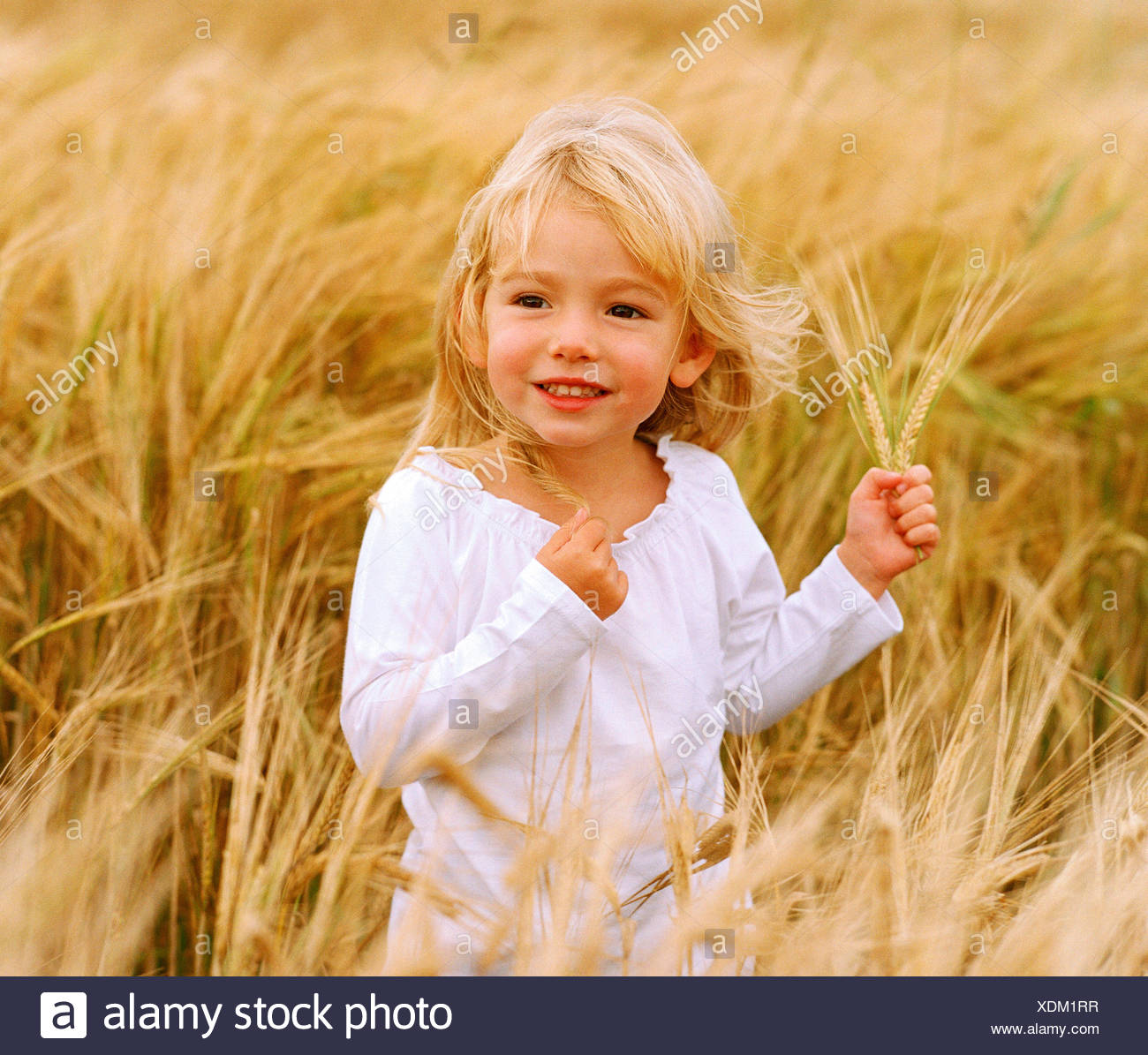 Children. Little blonde haired girl outdoors in wheat field. - Stock Image