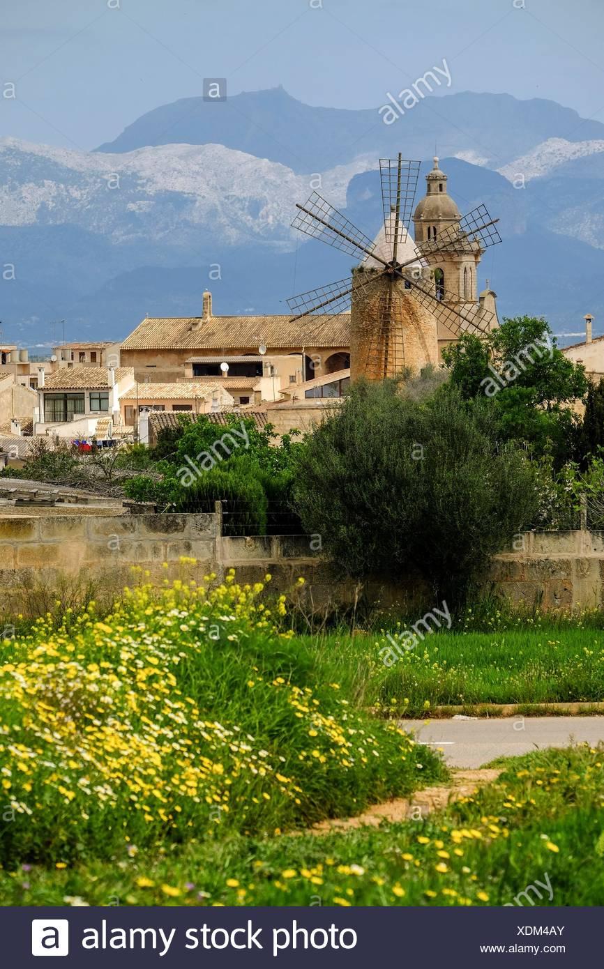ciclistas, Algaida, Mallorca, balearic islands, spain. Stock Photo