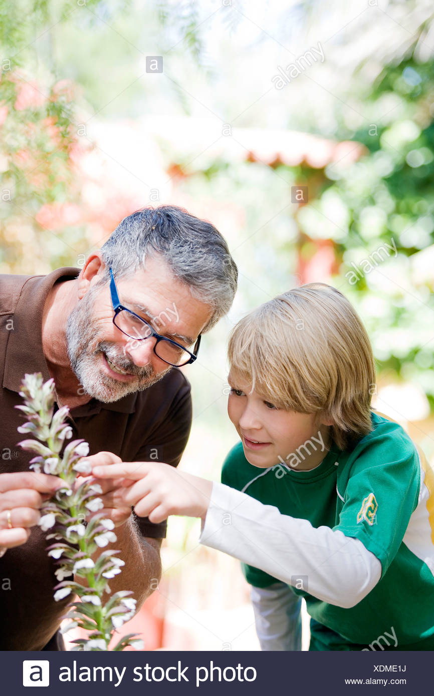 Man and child gardening - Stock Image