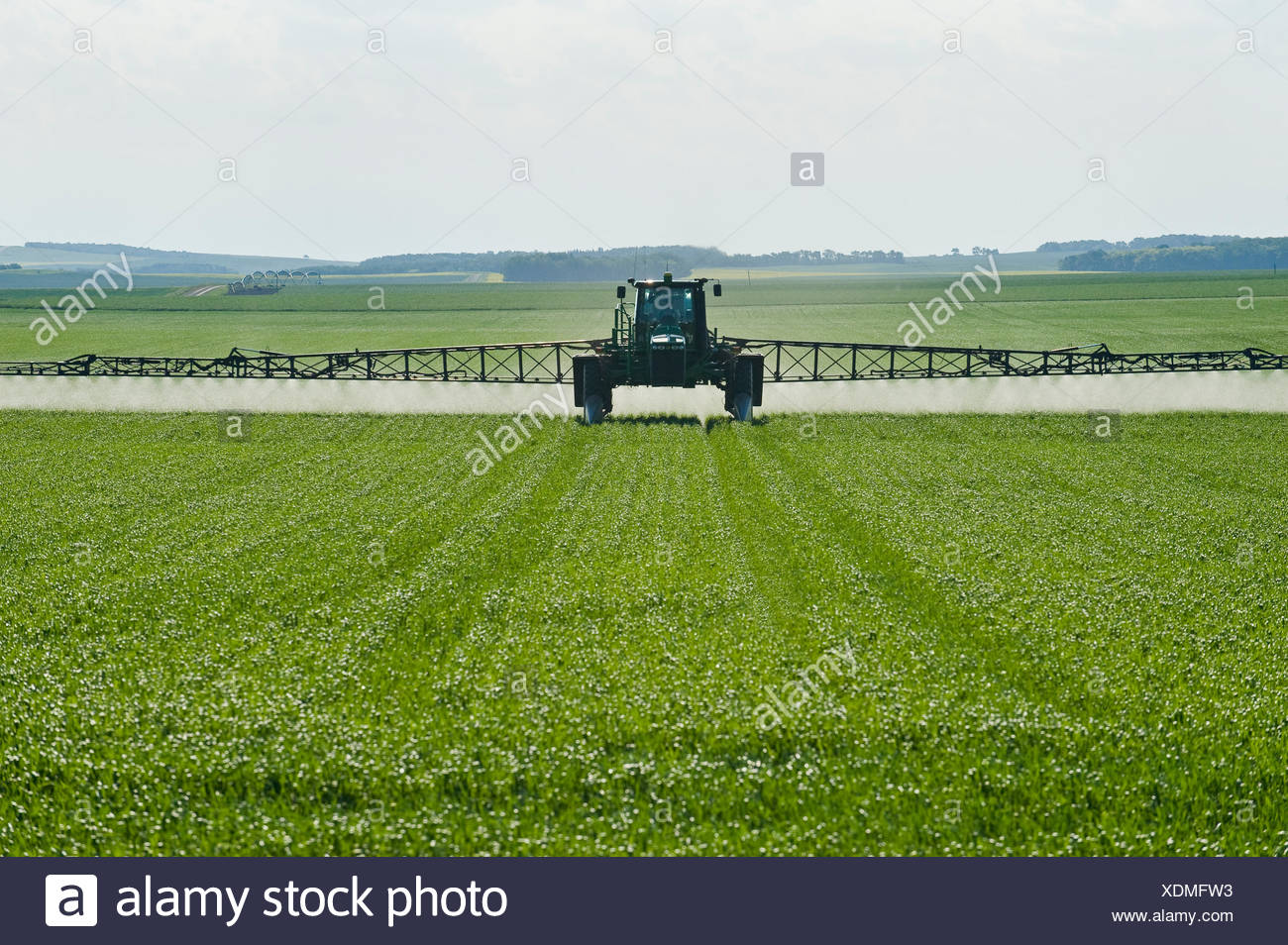a high clearance sprayer applies fungicide to wheat, near Holland, Manitoba, Canada - Stock Image