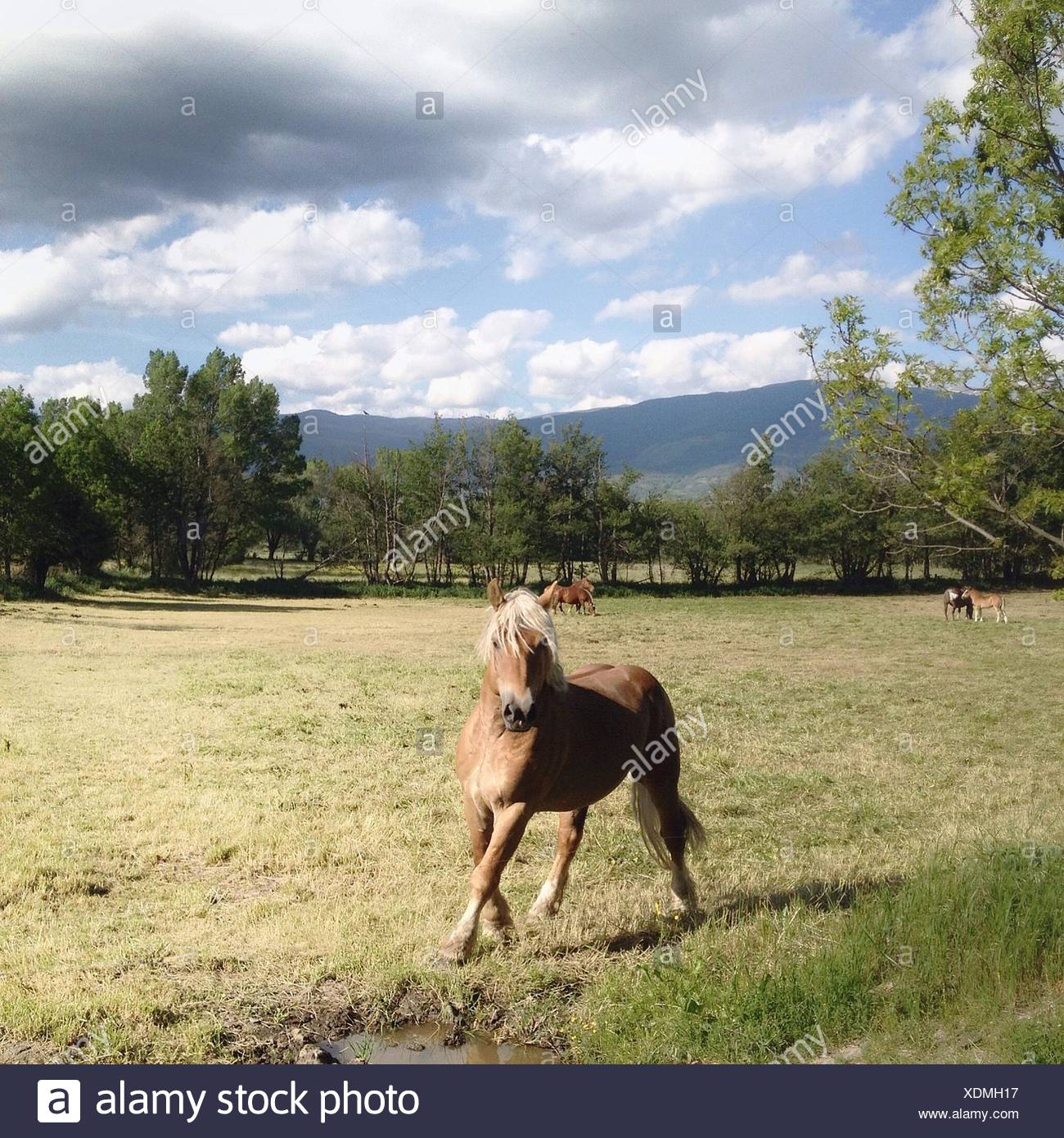 Spain, Cerdanya, Horse running in pasture - Stock Image