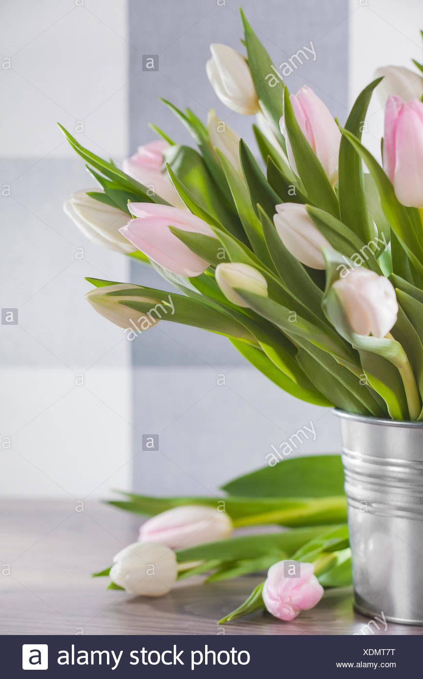 Tulips in a bucket on a wooden table - Stock Image