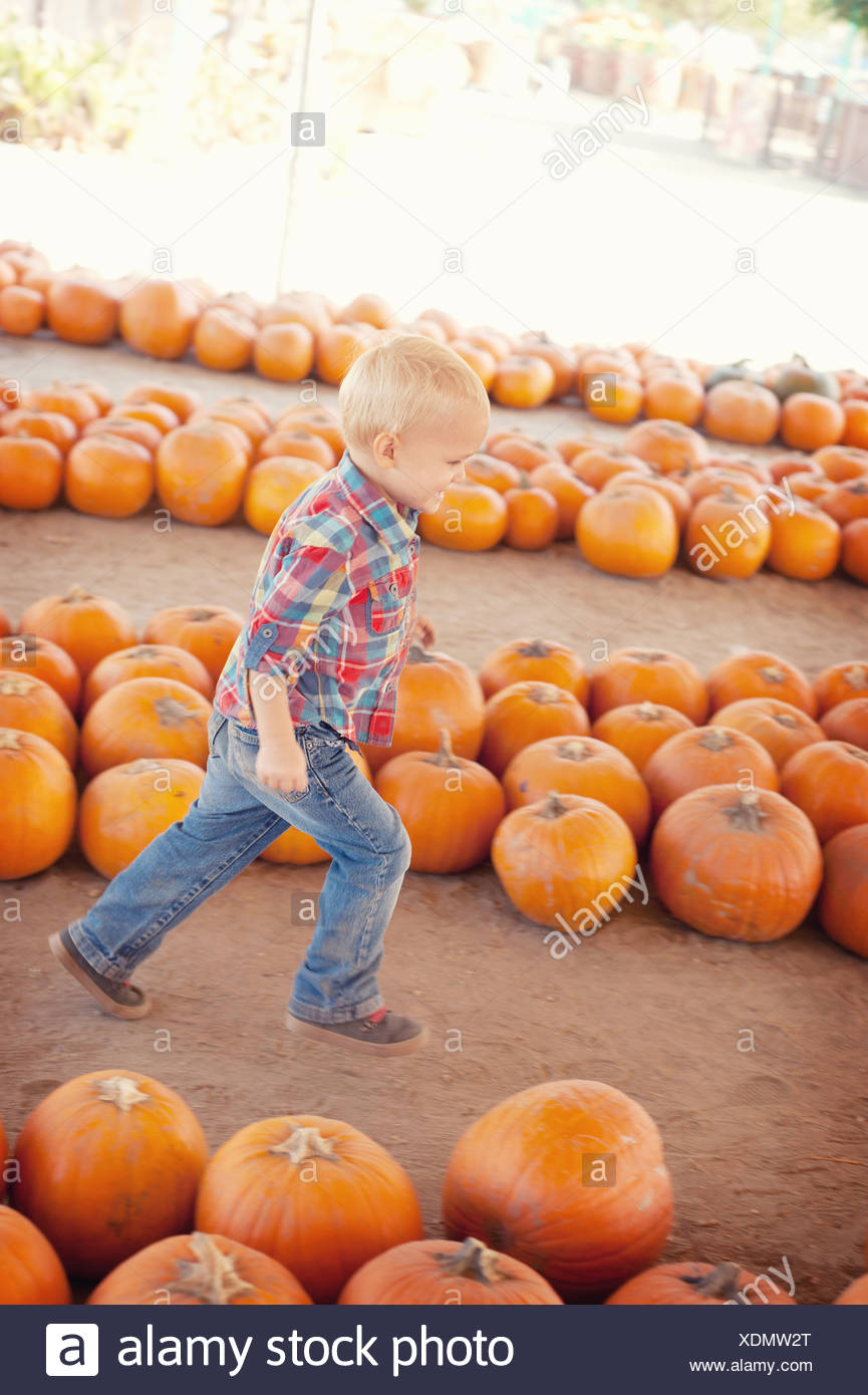 Boy running through pumpkins - Stock Image