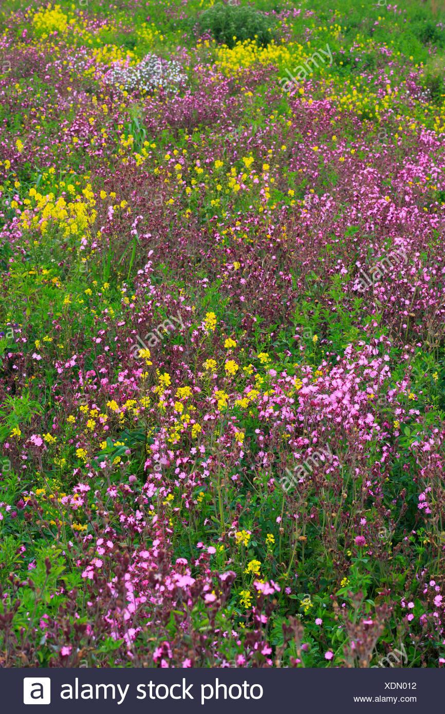 Detail Flower Flower Meadow Detail England Spring Spring Flowers