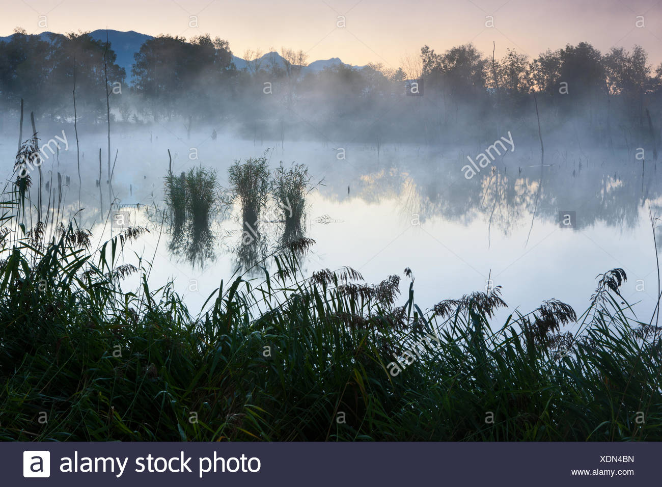 Oberriet, pit, Loo, Switzerland, Europe, canton St. Gallen, Rhine Valley, former clay pit, reed, morning fog - Stock Image