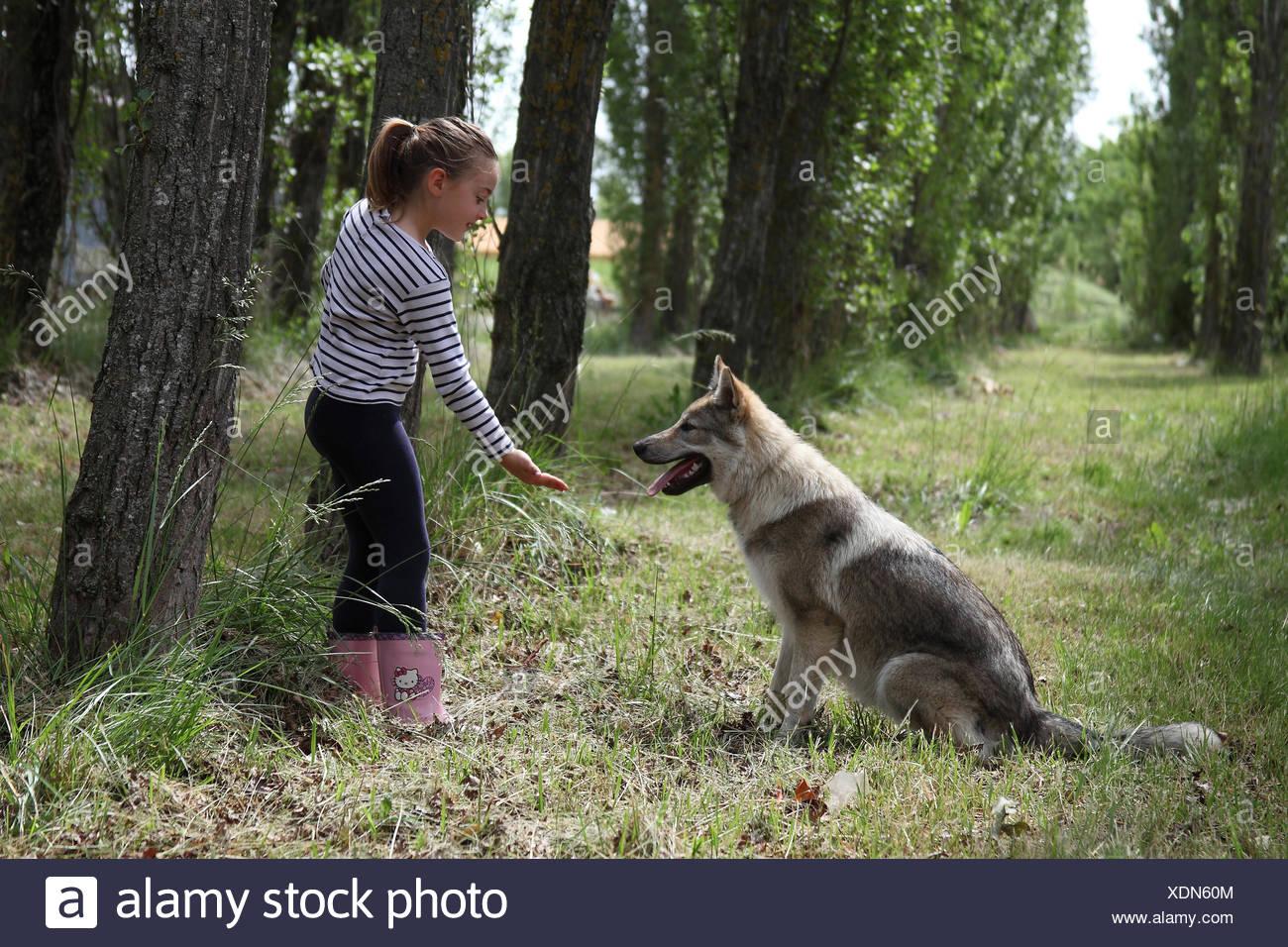 Little girl and Czechoslovakian wolfdog - Stock Image