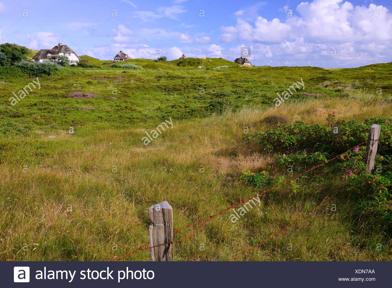 typische Friesenhaeuser, Reetdachhaeuser in den Duenen vom Hoernum, Sylt, nordfriesische Inseln, Nordfriesland, Schleswig-Holstein, Deutschland - Stock Image