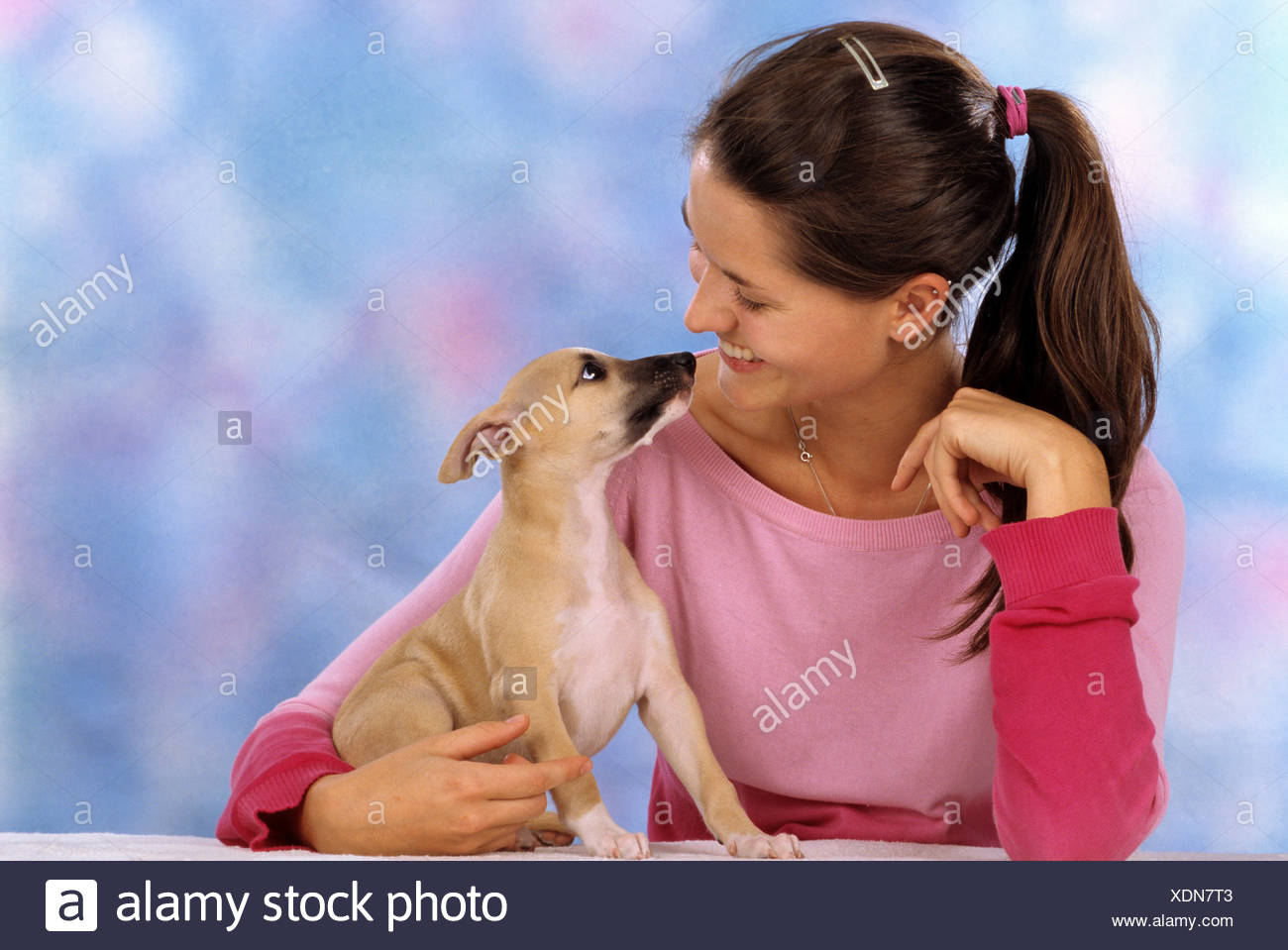 young woman with Whippet dog - puppy Stock Photo