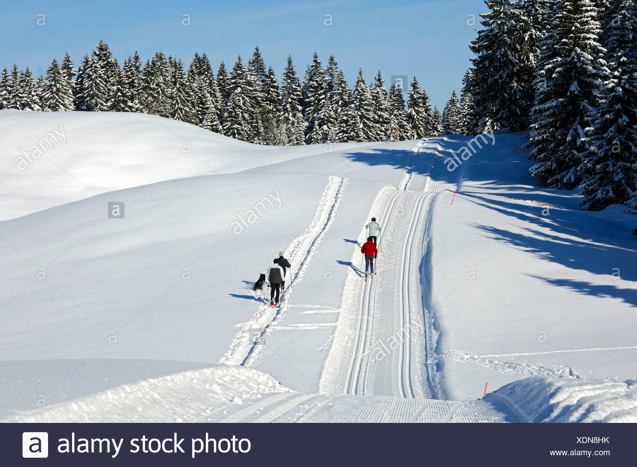 Groomed cross-country ski trail in the Jura Mountains near St. Cergue, Switzerland, Europe - Stock Image
