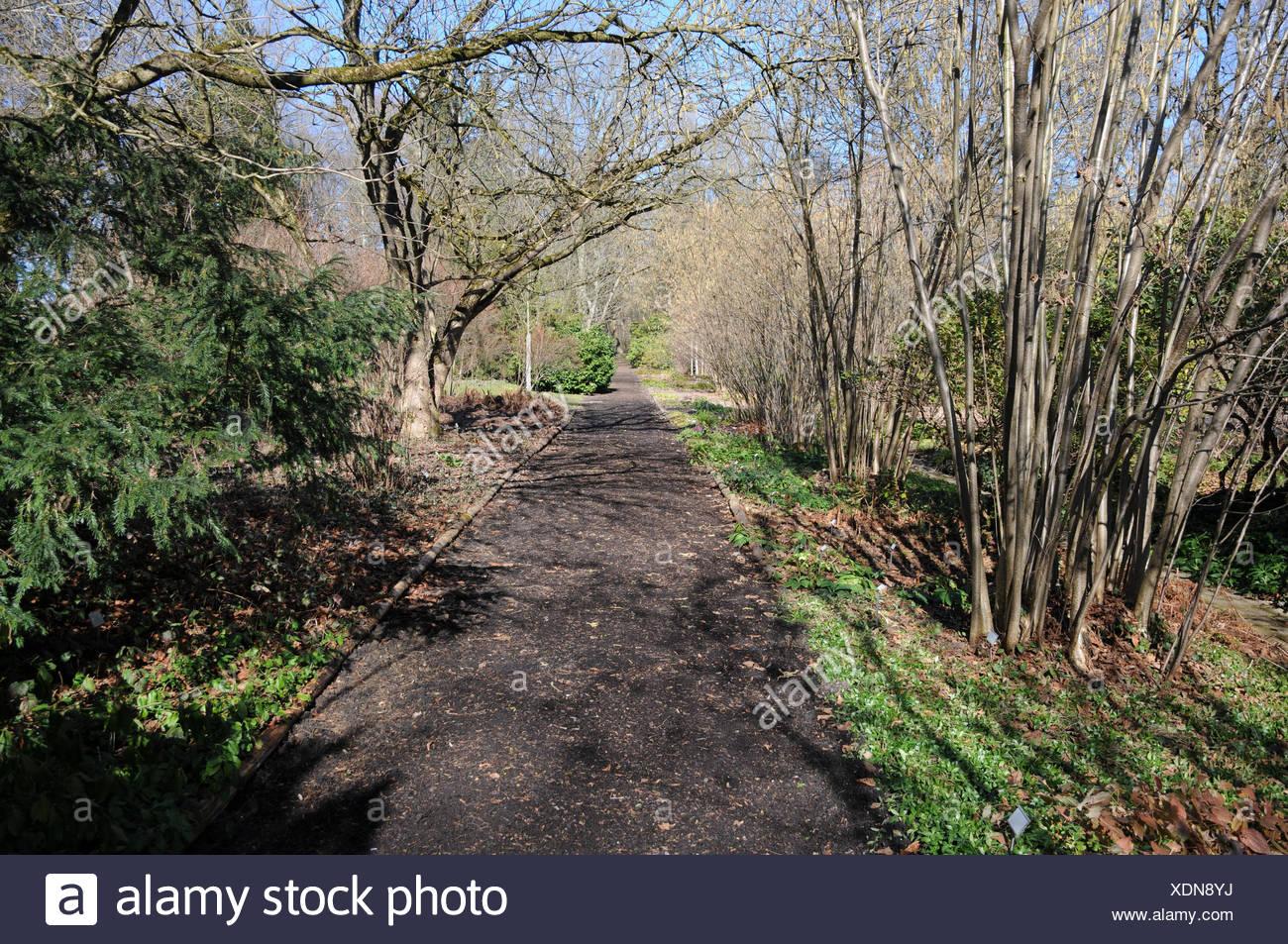 Garten-way with bark-pieces - Stock Image