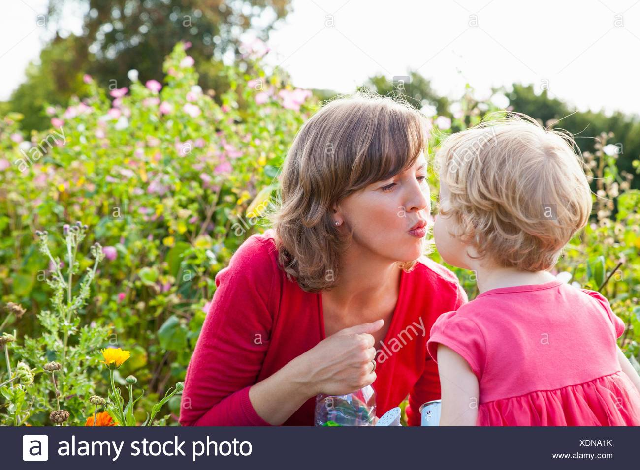 Mid adult mother and toddler daughter kissing in flower field Stock Photo