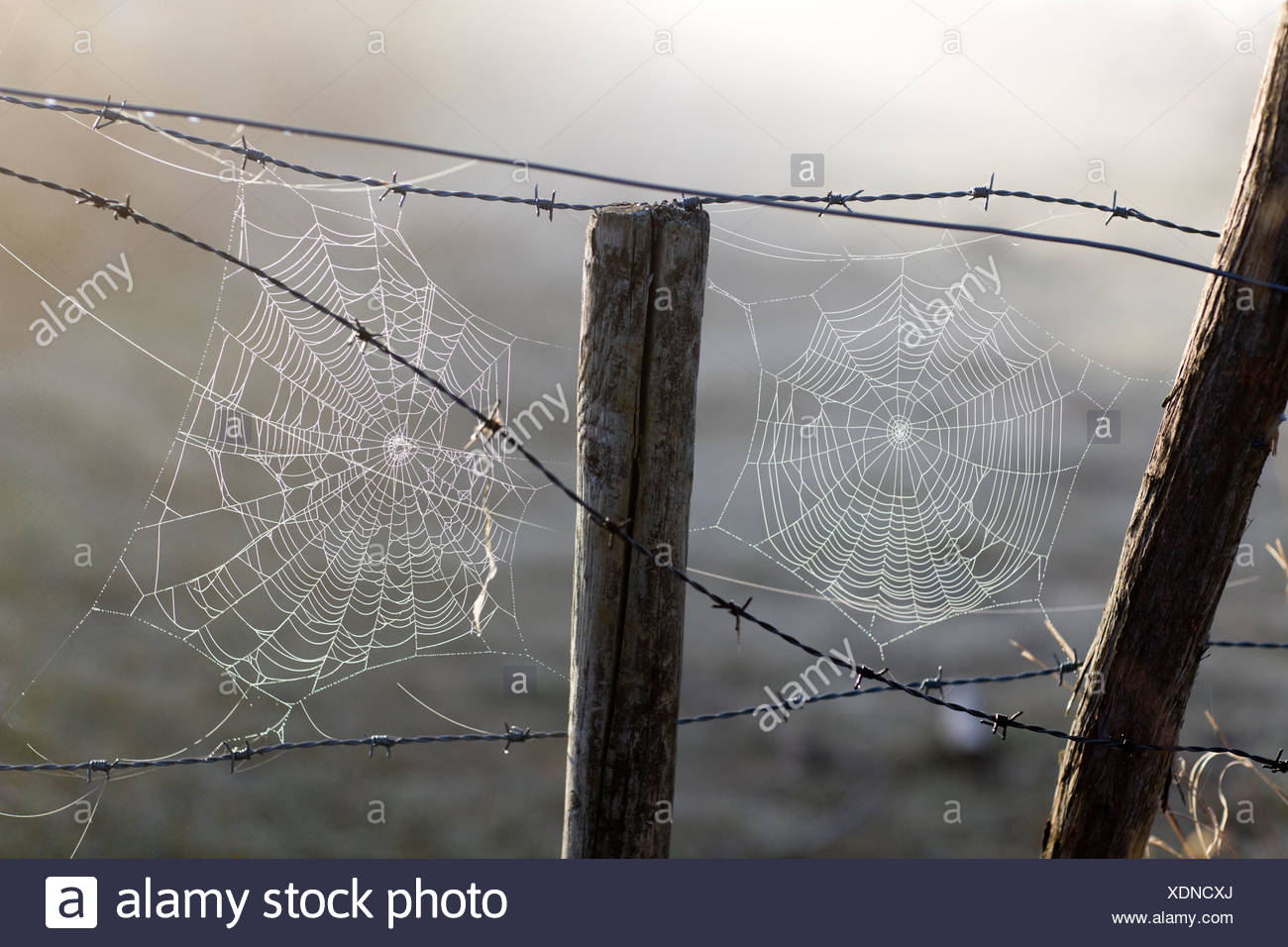 Spider´s web on barbed wire, Sweden Stock Photo: 283827562 - Alamy