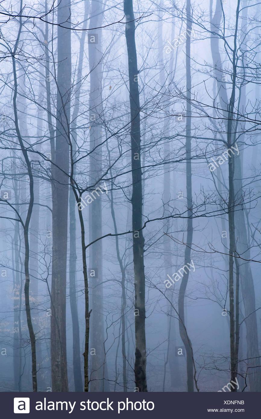 USA, Vereinigte Staaten, Amerika, Nebel, Dunst, nebelig, regnerisch, stimmungsvoll, kühl, atmosphärisch, Wald, Tennessee, TN, Gr - Stock Image