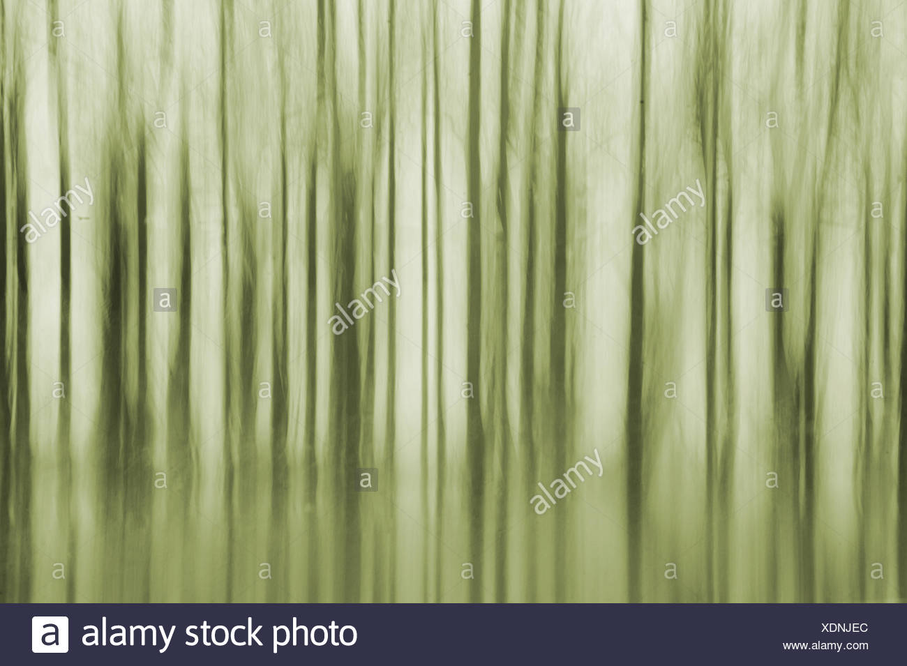 Trees abstract - Stock Image