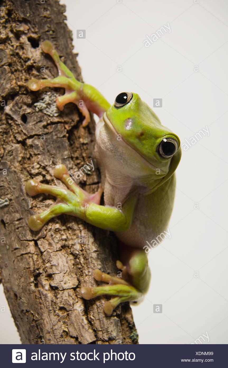 Frog Studio Stock Photos & Frog Studio Stock Images - Page 6 - Alamy