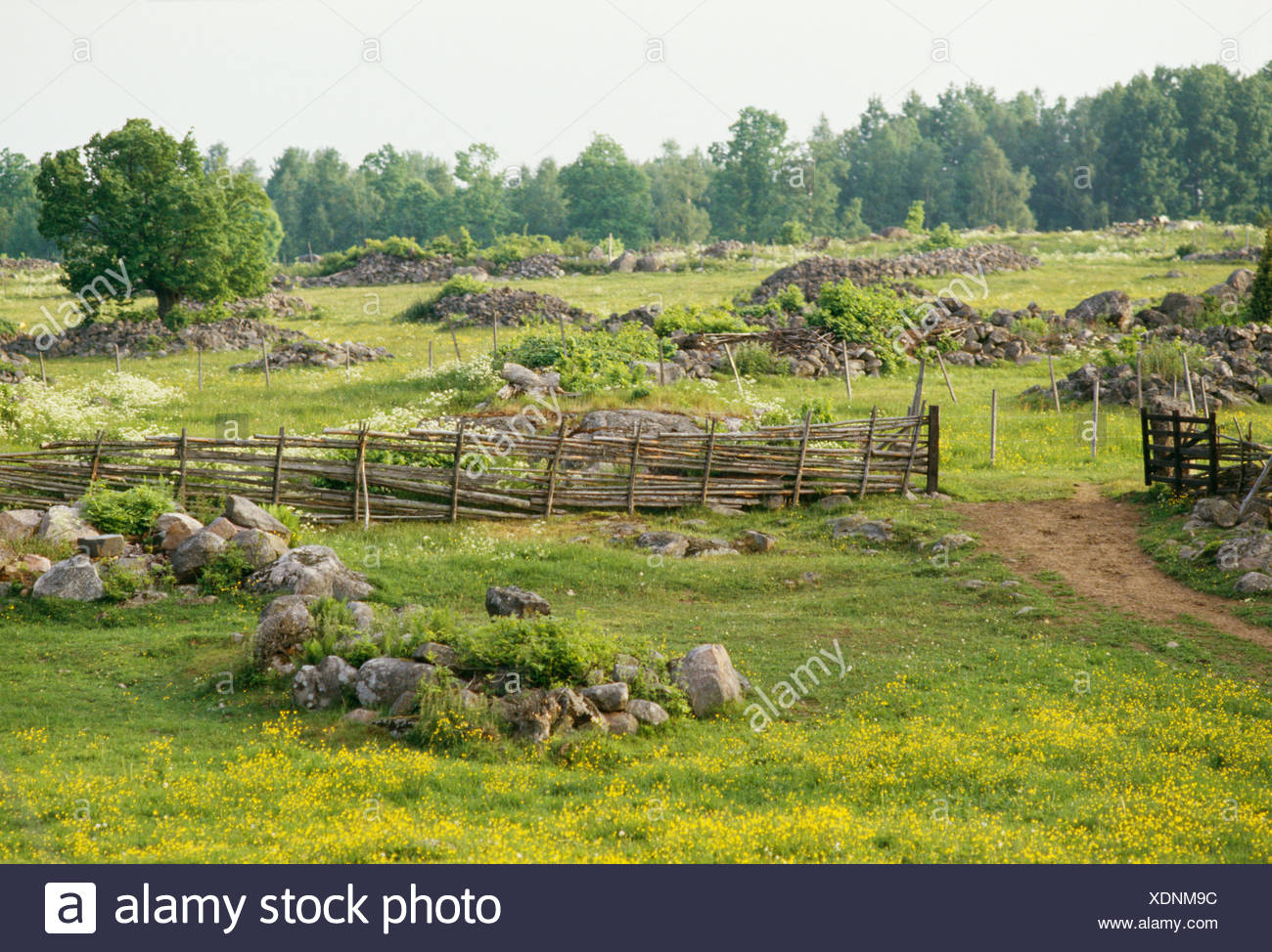 Mound of stones and pastureland, Smaland, Sweden. - Stock Image