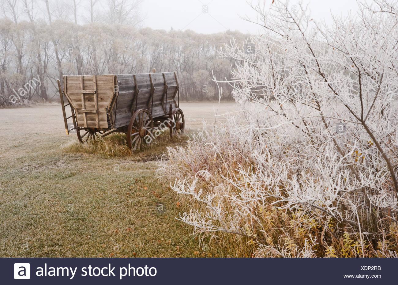 old wagon,frost covered trees, near Oakbank, Manitoba, Canada Stock Photo