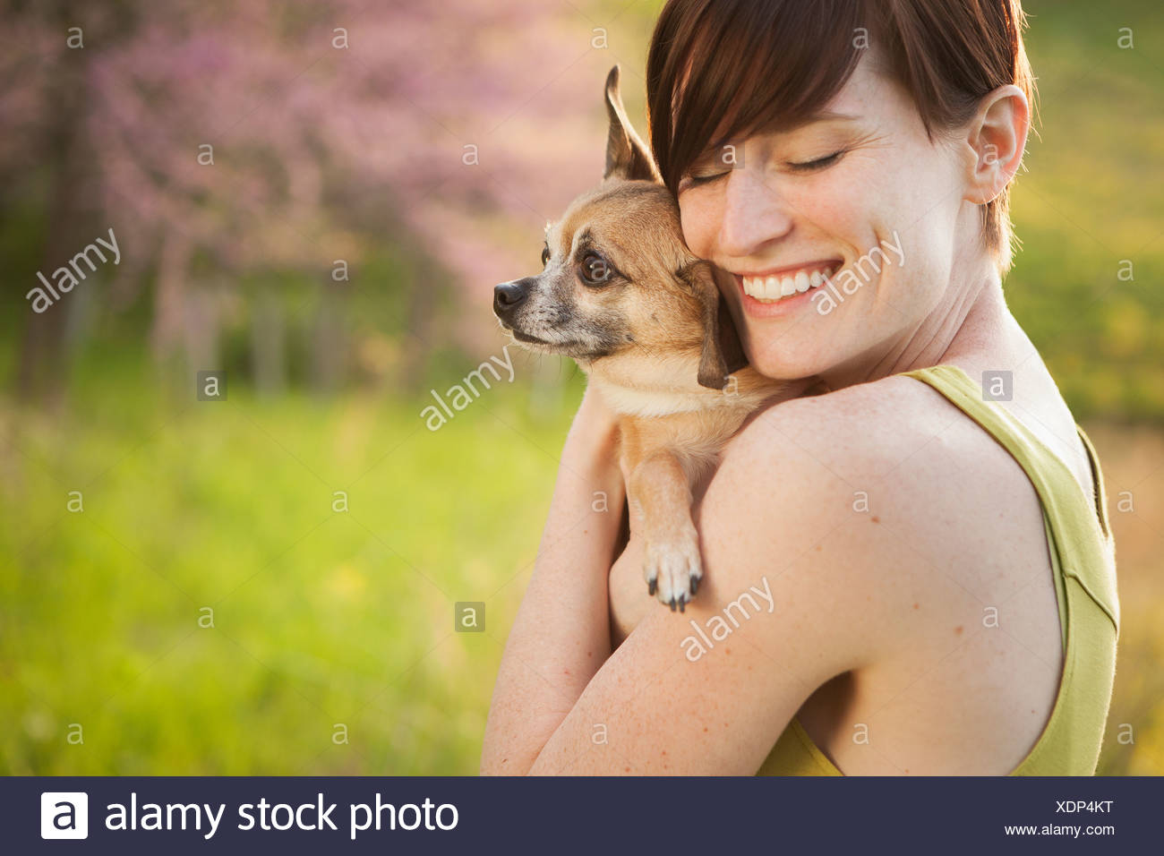A young woman in a grassy field in spring. Holding a small chihuahua dog in her arms. A pet. - Stock Image