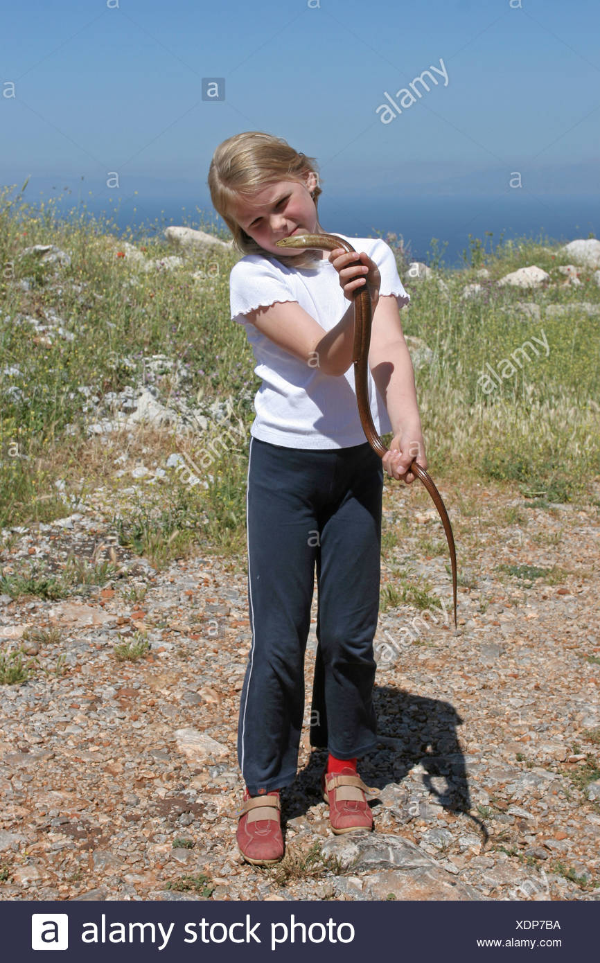 European glass lizard, armored glass lizard (Ophisaurus apodus, Pseudopus apodus), single animal in the hands of a small girl, Greece - Stock Image